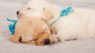 Is Your Carpeting Making Your Fur Babies Sick?