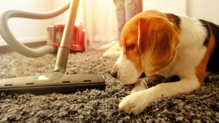 Information Page: Carpet Cleaning & Pet Treatment